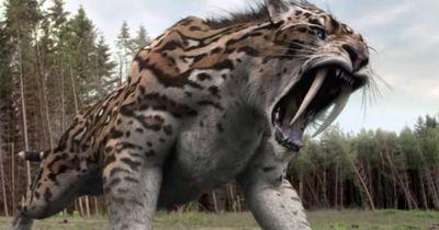 Ausgestorbene Großkatzen - Die Vorfahren unserer Katzen