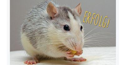 Nudelhersteller Barilla verzichtet zukünftig auf Tierquälerei