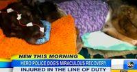 Officer RJ Young und sein Hund Bruno gelten als perfektes Team