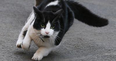 Probleme, die jeder Katzen-Besitzer kennt