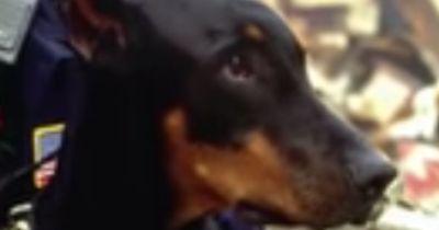 Warum verneigt sich ganz Amerika vor diesen Hunden - Sie folgen doch nur ihrem Instinkt?