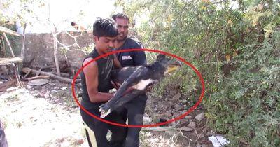 Dieser Hund fraß Rattengift - der Tod hatte schon angeklopft.