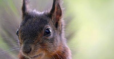 Bottrop - Eichörnchen stalkt Frau!