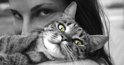 Bist du bereit für eine Katze? - Finde es jetzt heraus!