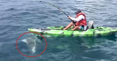 Ein Hai geriet unter sein Boot - es kommt, wie es kommen musste