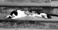 Tot und regungslos lag diese Katze auf der Straße!