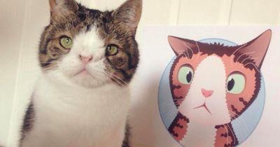 Monty ist DER  Katzen-Star im Internet
