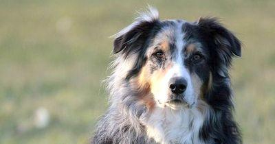 Hund lernt Menschensprache