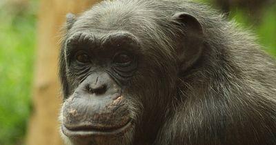 Glückliche Affen rund um den Globus