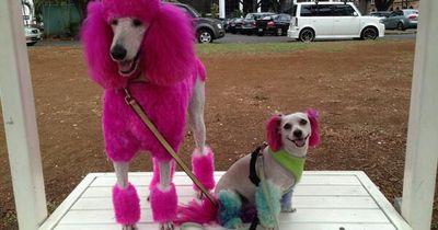 Die 8 verrücktesten Hunde-Frisuren aller Zeiten!