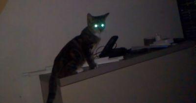 Katzen lieben Horror
