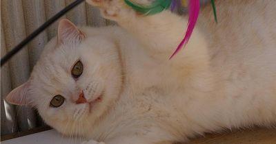 Diese 5 Katzentypen sollte jeder kennen