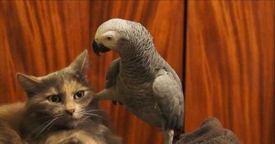 Katzen und Vögel - Wie Feuer und Wasser?