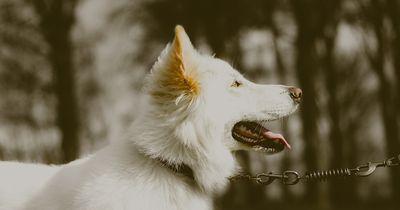 Dem süßesten Hund beim Aufwachsen zuschauen!