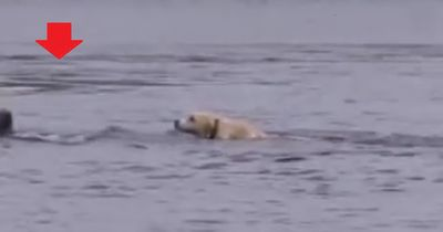 Was dieser Hund da im Wasser macht, ist echt unglaublich!