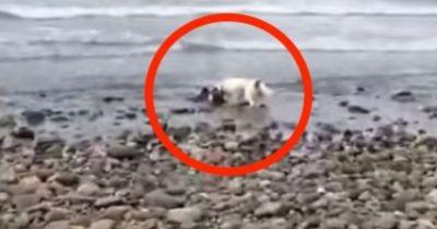 Er denkt sein Hund bellt das Meer an. Doch als er sich nähert ...
