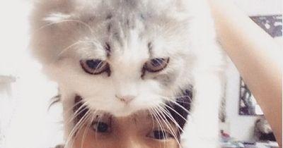 Katzenhüte sind der neuste Modetrend