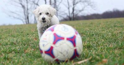 Wenn Tiere Fußball spielen
