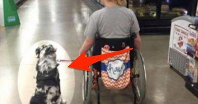 Diesen Hund darf niemand berühren. Andernfalls kann dieses Mädchen sterben.