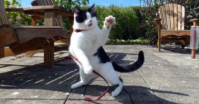 Ninja-Cats: Normale Hauskatzen werden zum gefährlichen Jäger! #ninjacat