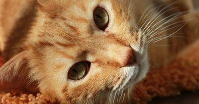 Die Katzen-Insel: Plage oder Segen?