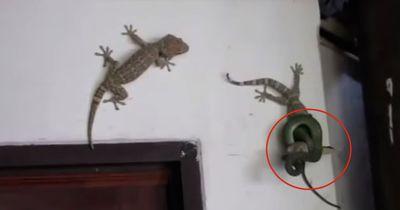 Sein Freund war in den Fängen einer Schlange