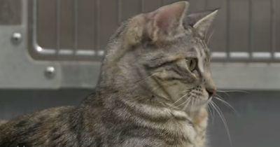 Diese Katze kann nie wieder laufen - dachten alle