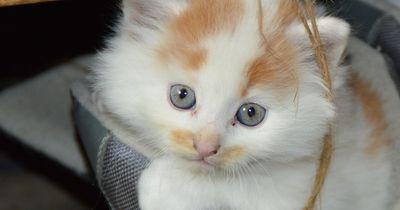 7 Merkmale dafür, dass deine Katze und du die besten Homies sind.
