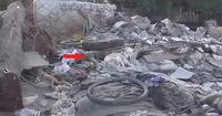 Dieser Hund lebte im Müll