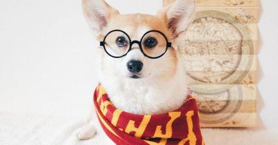 Diese 8 Welpen sind genauso große Harry Potter Fans wie du!