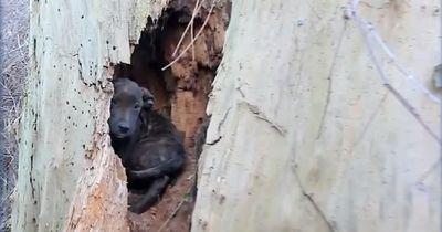 Maple hatte kein Zuhause und suchte in der Kälte einen warmen Platz zum schlafen.