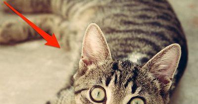 Mit DIESEN Dingen setzt ihr das Leben eurer Katze aufs Spiel