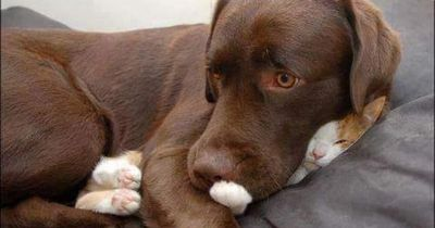 Schlechte Laune? Humor und Hundewelpen zusammen - besser geht es nicht!