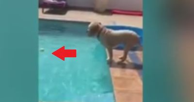 Dieser Hund ist echt clever!