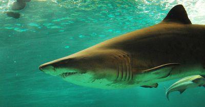 Von wegen Angeln ist langweilig: Hai sorgt für riesen Schock!