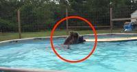 Sitzt ihr gerade im Pool? Was würdet ihr machen, wenn ER in euren Pool springt?
