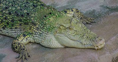 Erstaunliche Fakten über Krokodile