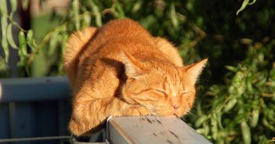 Jeden Abend tut diese Katze DAS!