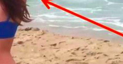 Dieser weiße Hai ist auf der Jagd UND wird er selbst zum Opfer!