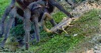 Vogelspinne und Skorpion - Zwei wie Feuer und Wasser