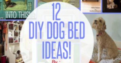 Die Top 12 der ungewöhnlichsten Hundebetten