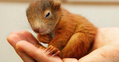 Achtung! Das solltest du über Eichhörnchenbabies unbedingt wissen