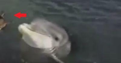 Dieses Tier liebt einen Delfin!