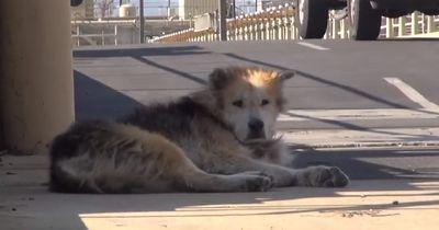 Kaum jemand möchte einen alten Hund adoptieren