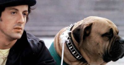Die wahre Geschichte hinter dem erfolgreichen Film 'Rocky Balboa'