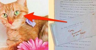 Ihr Besitzer liegt im Sterben und tut DAS für ihre ängstliche Katze