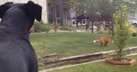 Hunde können sooo eifersüchtig werden :D