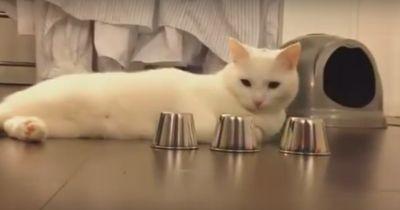 Diese Katze ist ein echter Zocker!