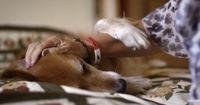 Wie ein trauriger Hund das Leben seiner Besitzerin rettete