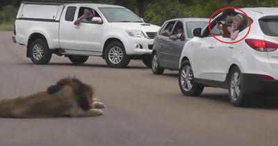 Darum sollte man bei einer Safari im Auto bleiben...